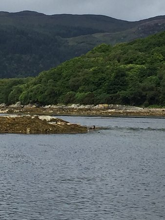 Tighnabruaich, UK: photo0.jpg