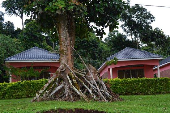 Ssese Islands, Uganda: True Nature