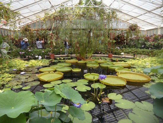 Royal Botanic Gardens, Kew: Kew Garden   Waterlily House