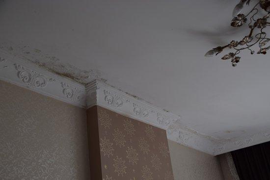 Hotel Broken Column: Massiver Schimmel