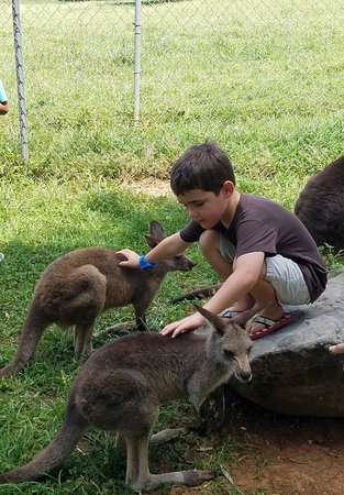 Horse Cave, Кентукки: Our grandson enjoying the kangaroo compound
