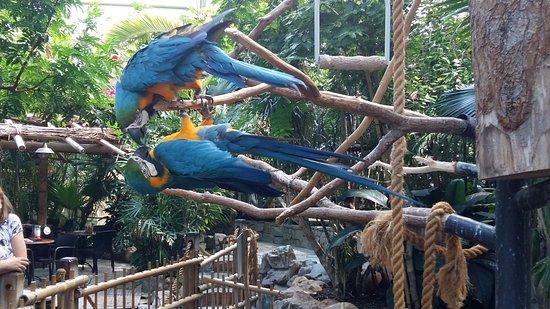 Center Parcs De Kempervennen: Parrots in the Market Dome