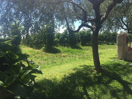 Риволи-Веронезе, Италия: photo1.jpg