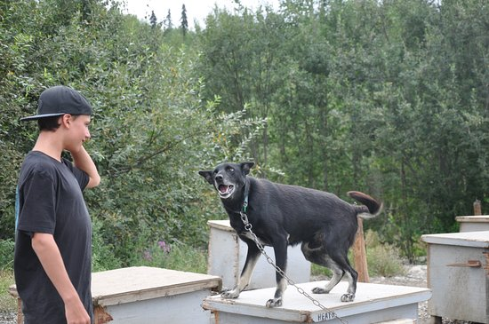 Big Lake, AK: very excited but friendly dogs