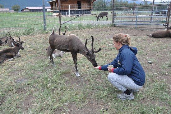 Reindeer Farm照片