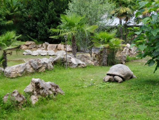 Tartarughe di terra zoo foto di parco natura viva for Lago tartarughe