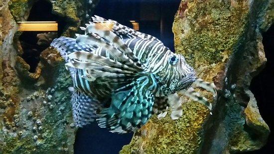Chesapeake Bay Aquarium Picture Of Virginia Aquarium