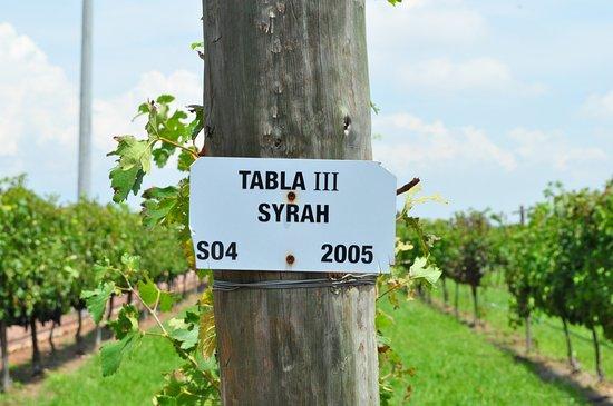 Vinedos Cuna de Tierra : Really liket the Syrah!