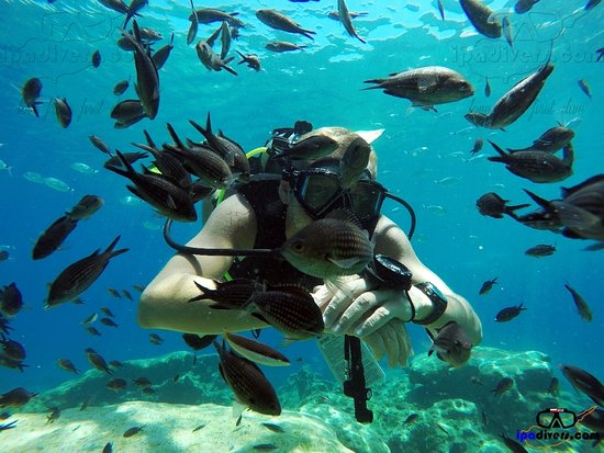 IPAdivers Diving Center