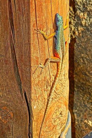 Augrabies Falls National Park, South Africa: DSC09898_large.jpg