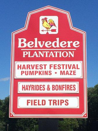 Belvedere Plantation