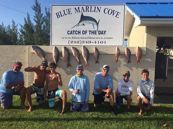 Blue Marlin Cove: Mutton Snapper