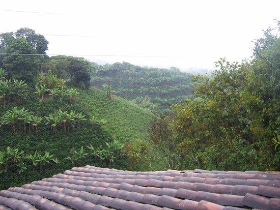 Bosques Del Saman - Alcala 이미지
