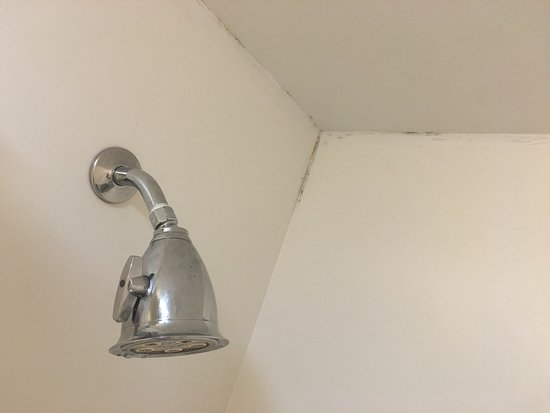 La Quinta Inn Queens New York City: mold in bathroom shower