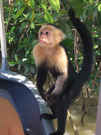 Manuel Antonio Expeditions: photo1.jpg