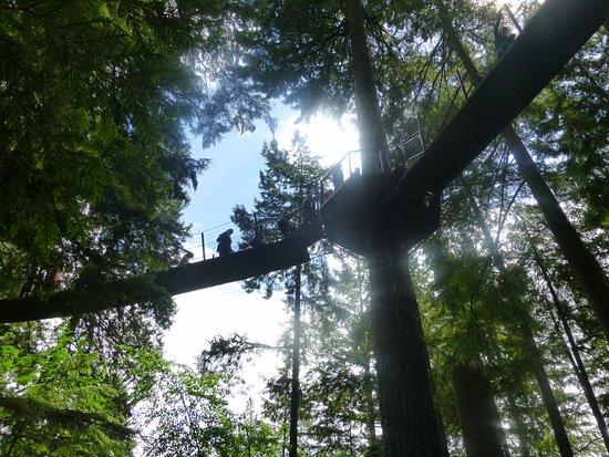 Βόρειο Βανκούβερ, Καναδάς: Treetop Adventures