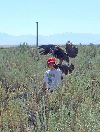 Portola, Kalifornie: 8 year old Cooper handling Larry the Lanner Falcon.