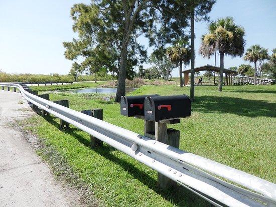 Florida Dolphin Tours: Le site d'où nous avons pris l'airboat