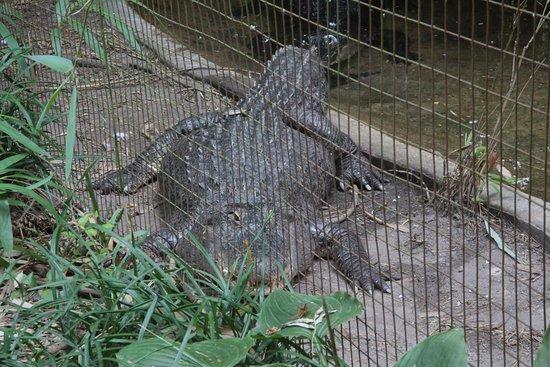 Salisbury Zoo: Scary gator!