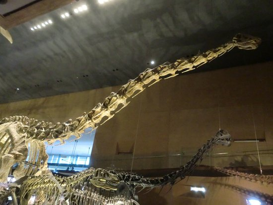 Kitakyushu Museum of Natural History & Human History Photo