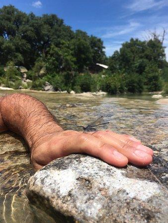 Blanco, TX: Dragonfly