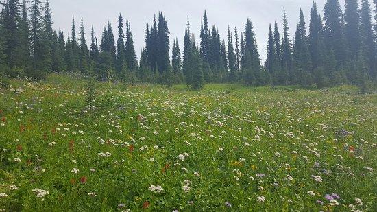 Mount Revelstoke National Park 사진