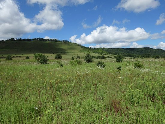 Spring Green Preserve