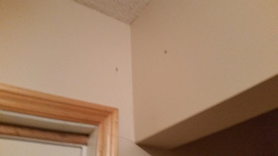 French River, Canadá: Bugs on wall never clean out