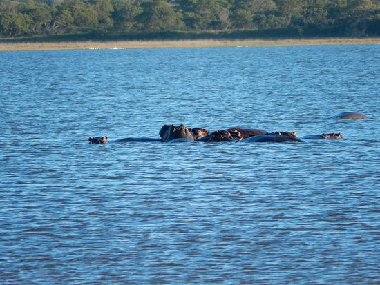 Maputaland Coastal Forest Reserve, Republika Południowej Afryki: Hippos on the lakes