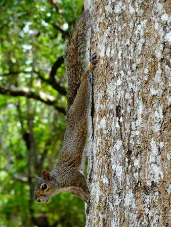 Sebring, Floryda: Squirrel checking us out