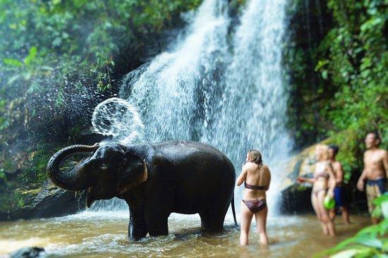 Chiangmai Elephant Land