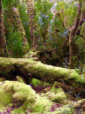 Strahan, ออสเตรเลีย: Walk in the Rain Forrest