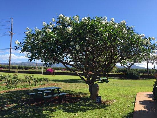 Kalaheo, Hawaï: お店の入口(奥がコーヒー農園)