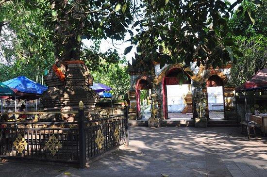 Jinghong, China: 曼听佛寺门前的塔包树