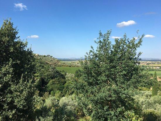 Azienda Fontelunga: photo5.jpg