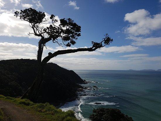 Mangawhai Heads cliff walk, Hen Island in the distance.