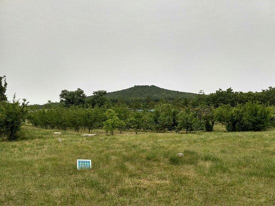 Tomb of Emperor Qin Shi Huang: Вид с другой стороны- вся территория представляет собой примерно такой сад