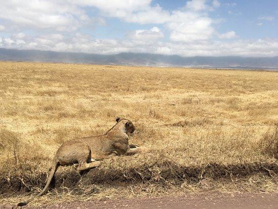 Arusha Region, แทนซาเนีย: photo5.jpg