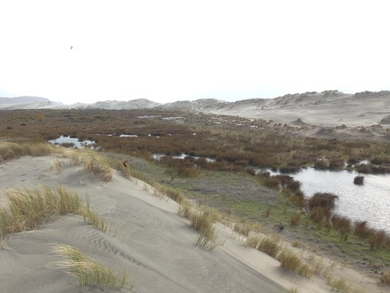 Golden Bay, New Zealand: In between the front and back dunes