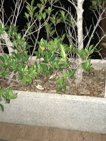 Baan Haad Ngam Boutique Resort & Villas: Megots de cigarettes dans les pots de fleurs sur la terasse de ma chambre