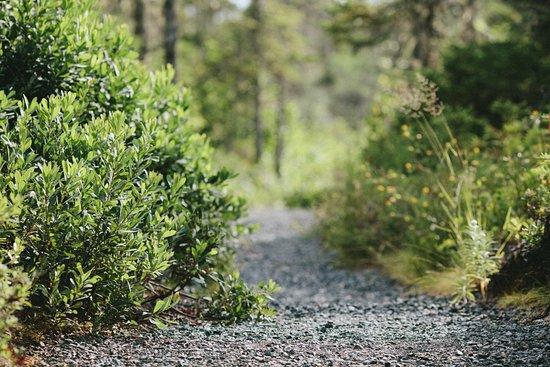 Glovertown, Canadá: Terra Nova national park trail system through the grasslands