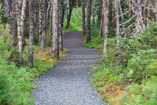 Glovertown, Канада: Terra Nova national park trail system into the woods