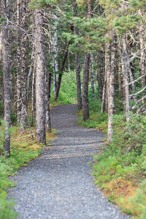 Glovertown, Canada: Terra Nova national park trail system forest view