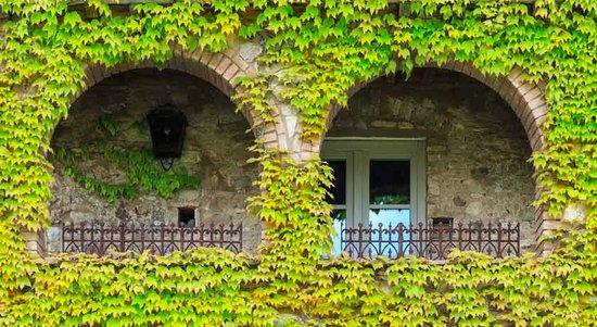 Bibbona, Italy: dettaglio