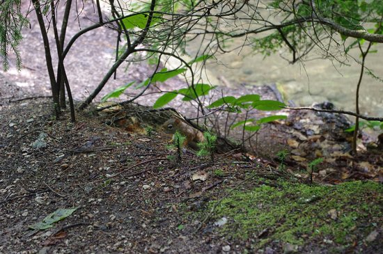 Franconia Notch State Park: Lots of red squirrels