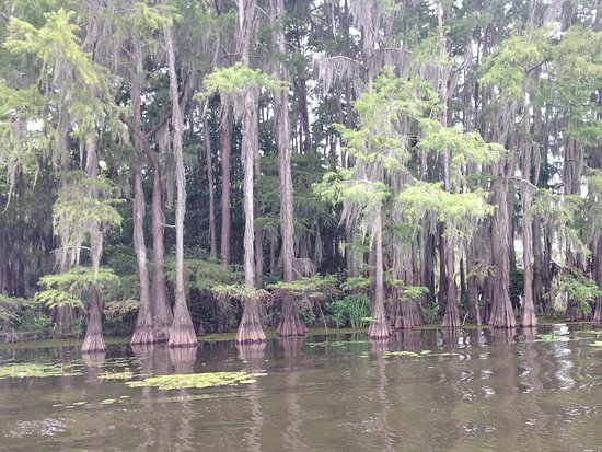 Captain Ron's Gator Park, Petting Zoo and Botanical Gardens: Beautiful Cypress Trees