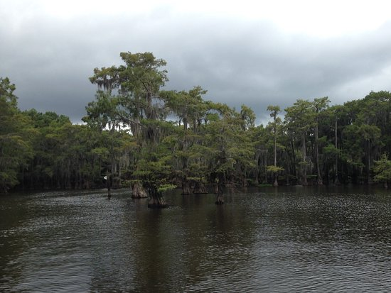 Captain Ron's Gator Park, Petting Zoo and Botanical Gardens: Caddo Lake