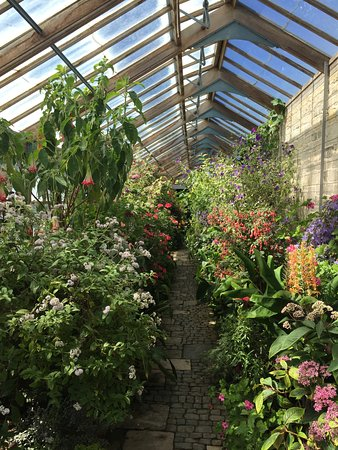 Storrington, UK: Greenhouse full of scents