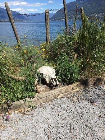 Isole di Brissago : photo3.jpg