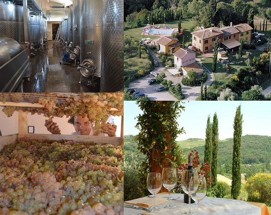Montespertoli, Italië: taste our wine and see all what the process involve from the vineyard to the cork